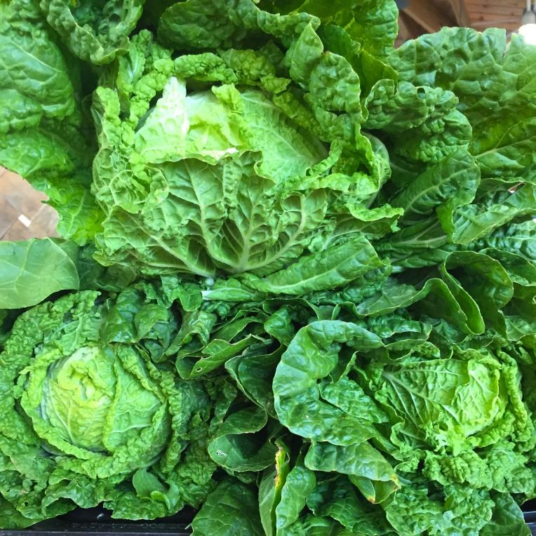 Blanc_Farmers Market